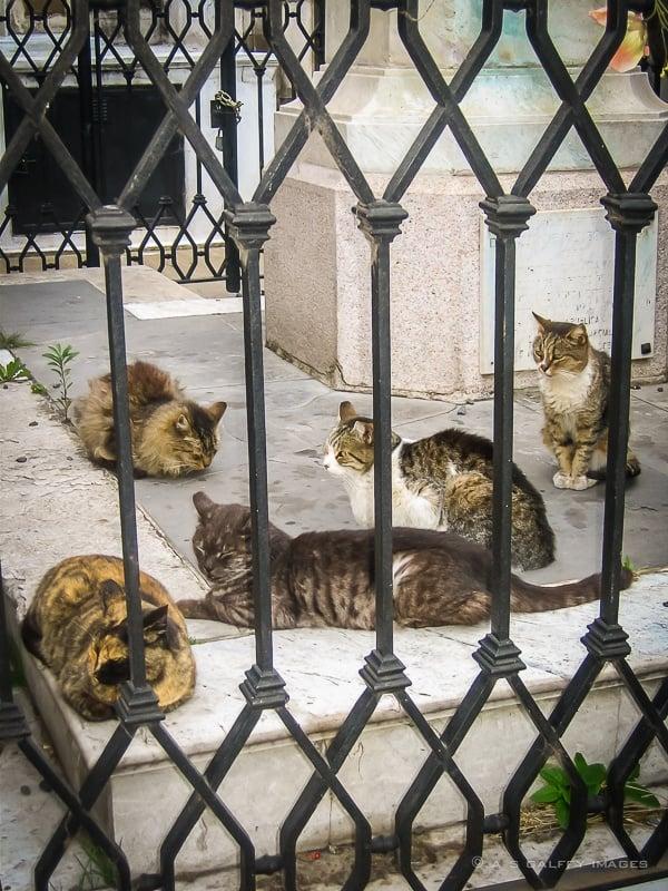 Cats of La Recoleta Cemetery