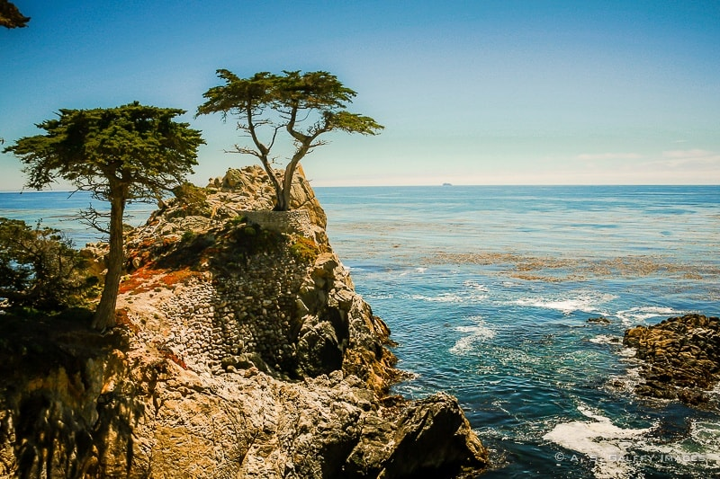 The Weekly Postcard: The Lone Cypress