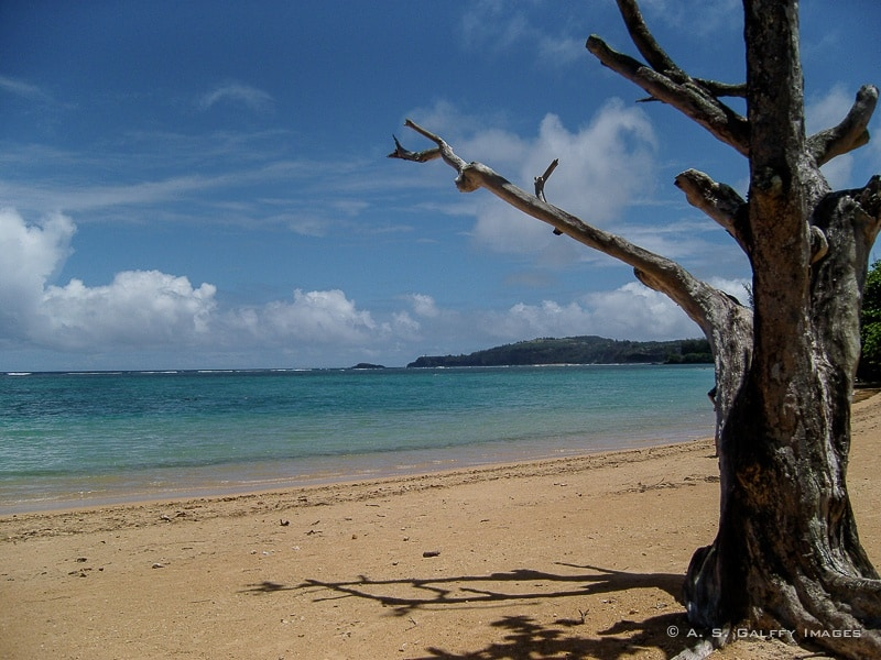 Dunk Island Holidays: A Guide For First Time Visitors