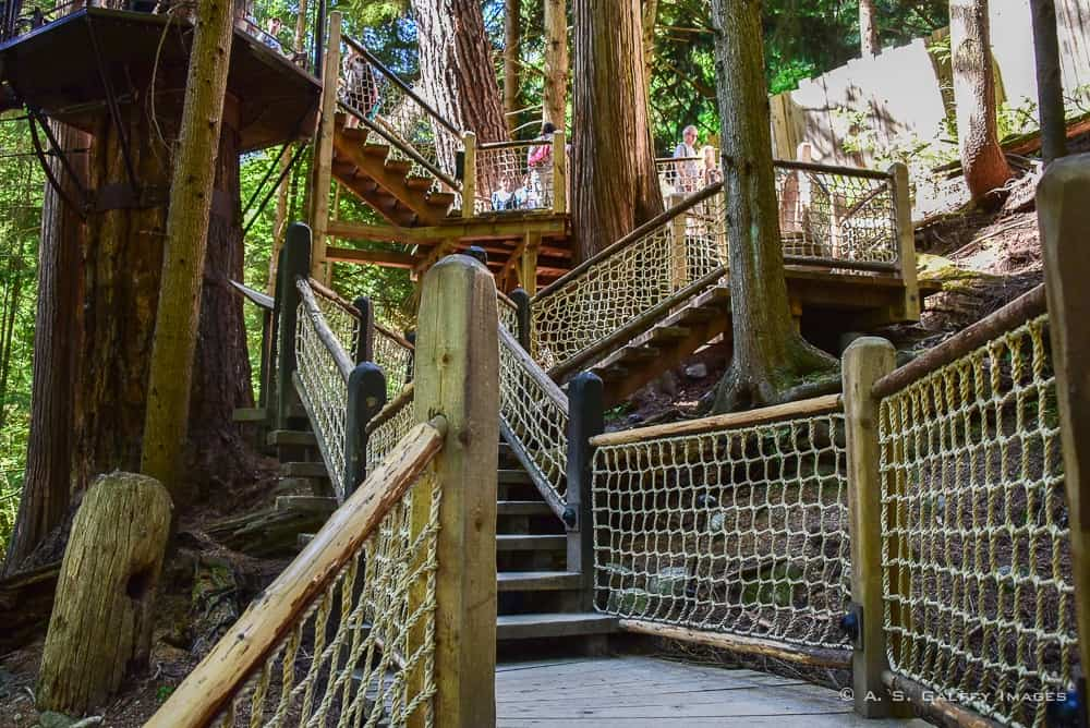 Walking platforms in Capilano park