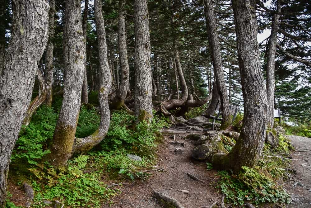 waking through the forest is one of the things to do in Juneau
