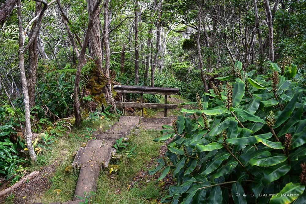 Alka'i Swamp Trail