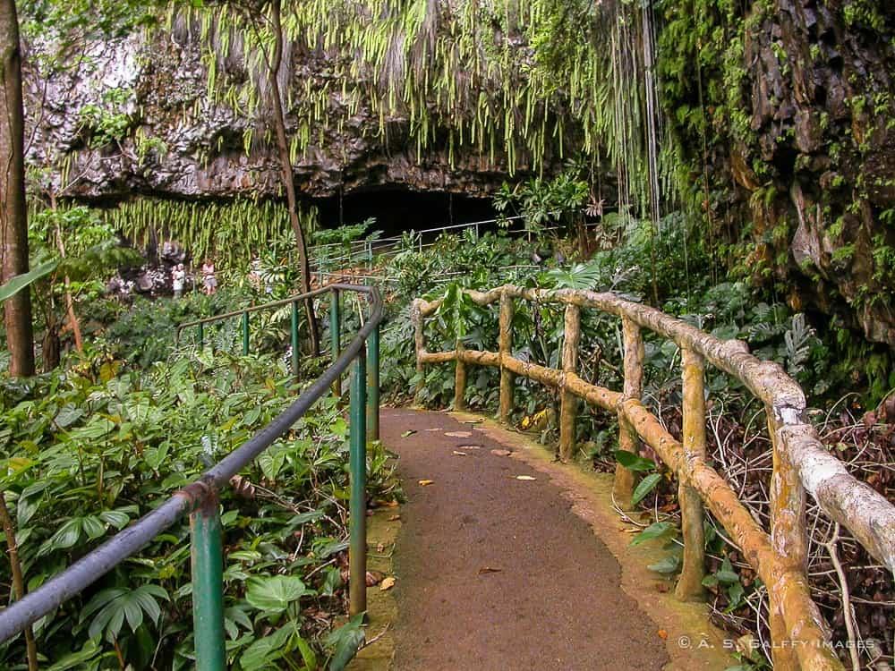 Fern Grotto in Kauai