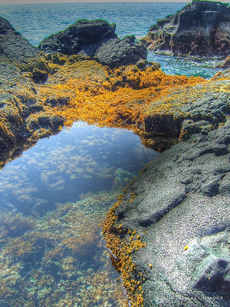 Tidepools in Hawaii