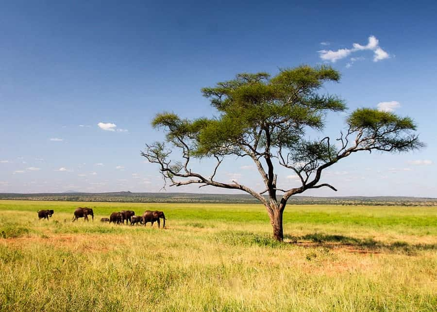 Serengeti National Park, Tanzania - Best countries to visit in Africa
