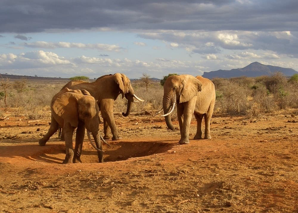 Elephants in Kenya - Best countries to visit in Africa