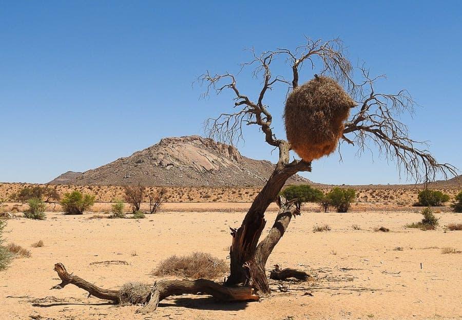 View of the Calahara Desert