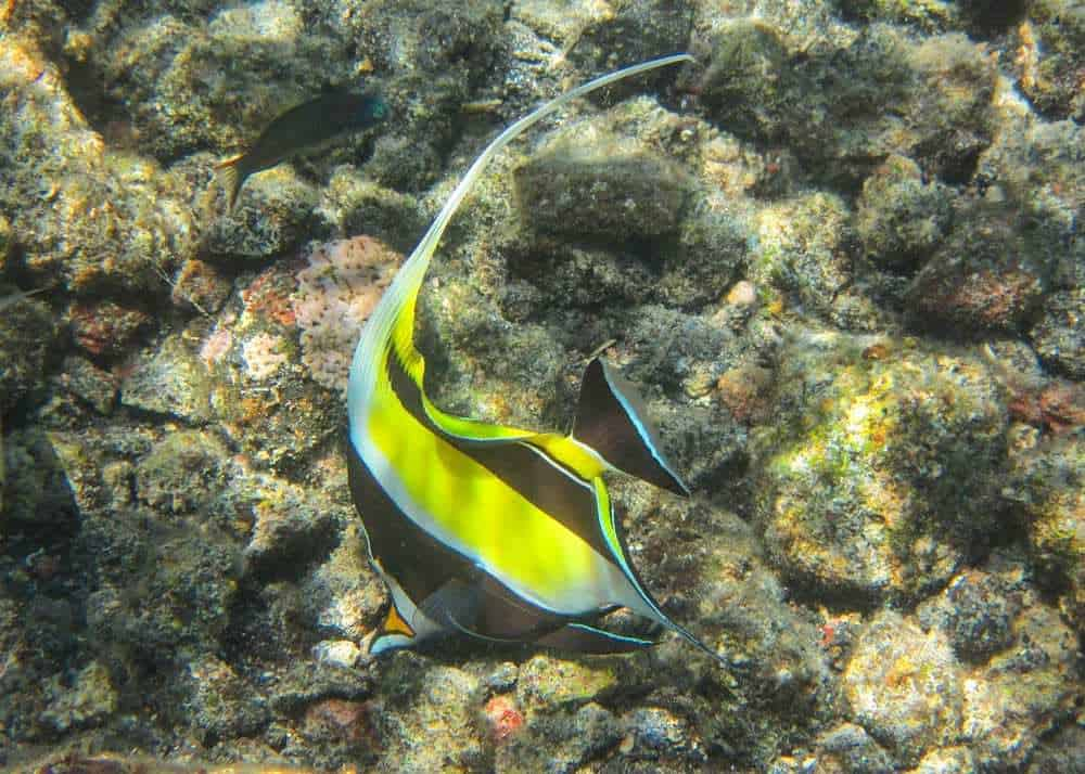 Tropical fish in Maui