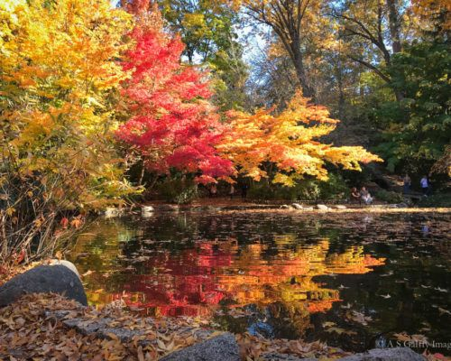 The Weekly Postcard: Spectacular Fall Colors in Southern Oregon