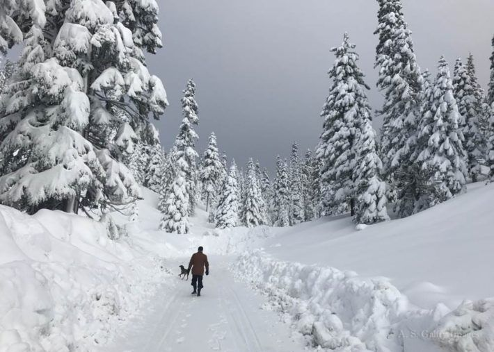 Fun Things to Do in Lake Tahoe in Winter