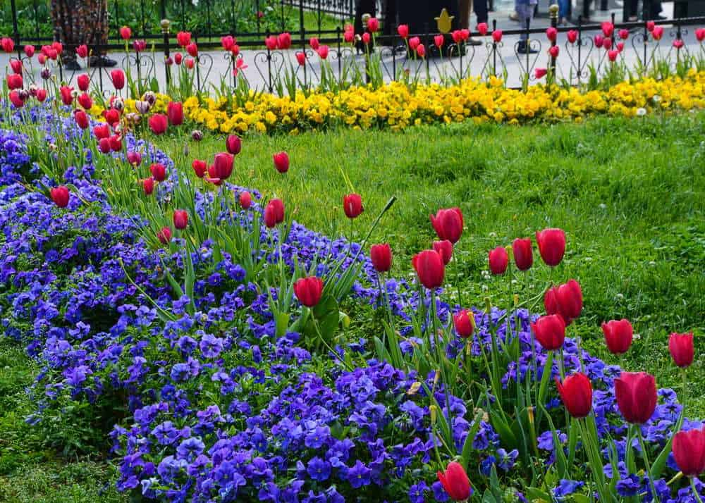Tulips in spring, best time to visit Europe