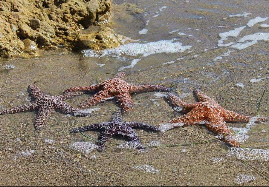 Tidepools at Malibu - Los Angeles Itinerary